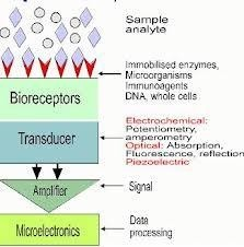 Definizione, caratteristiche e principali tipologie dei Biosensori