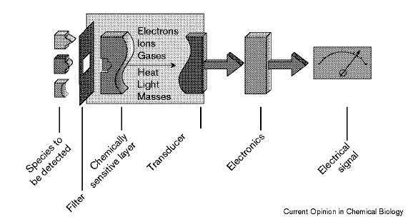 Definizione ed elementi principali di un biosensore