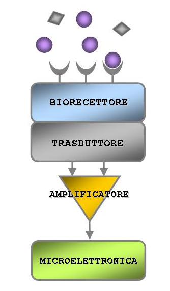 Le caratteristiche dei fattori di prestazione per un biosensore